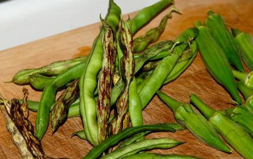 GrowDammit Okra & Rattlesnake Beans