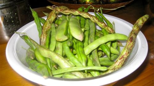 Rattlesnake Beans & Lima Beans