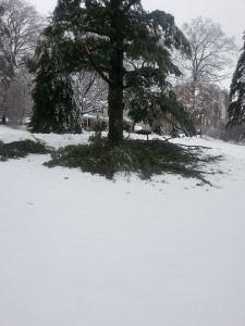 snowcarnage2